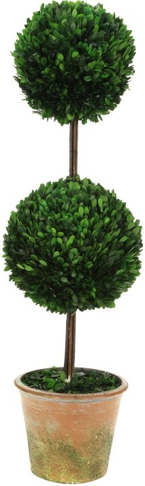 10-00910.TALL DBL BXWD TOPIARY42''